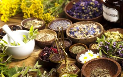 Herbs for your health and wellness, know the types of herbs and their benefits